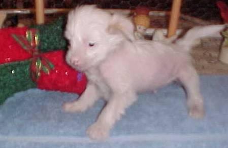 sabripups 4 weeks old.jpg